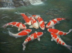 koi-cyprinus-carpio-japanese1